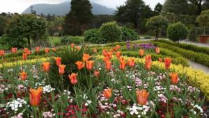 Garden Flower Images