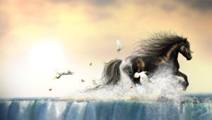 Horse Computer Wallpaper