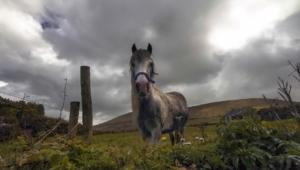 Horse Hd Desktop