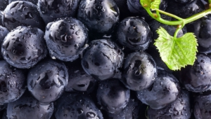 Pictures Of Blueberries