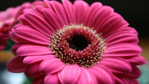 Pink Flower High Definition Wallpapers