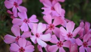 Pink Widescreen