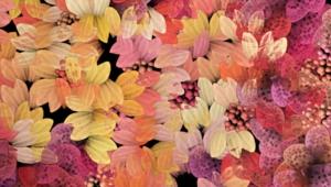 Autumn Flower Desktop