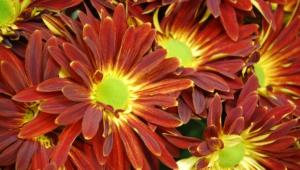 Autumn Flower High Definition