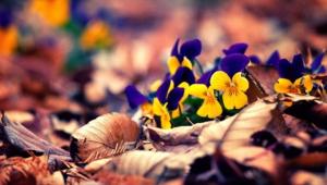 Autumn Flower Photos