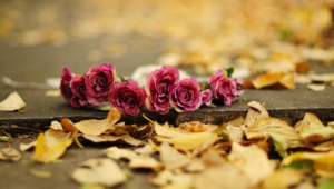 Autumn Flower Wallpaper
