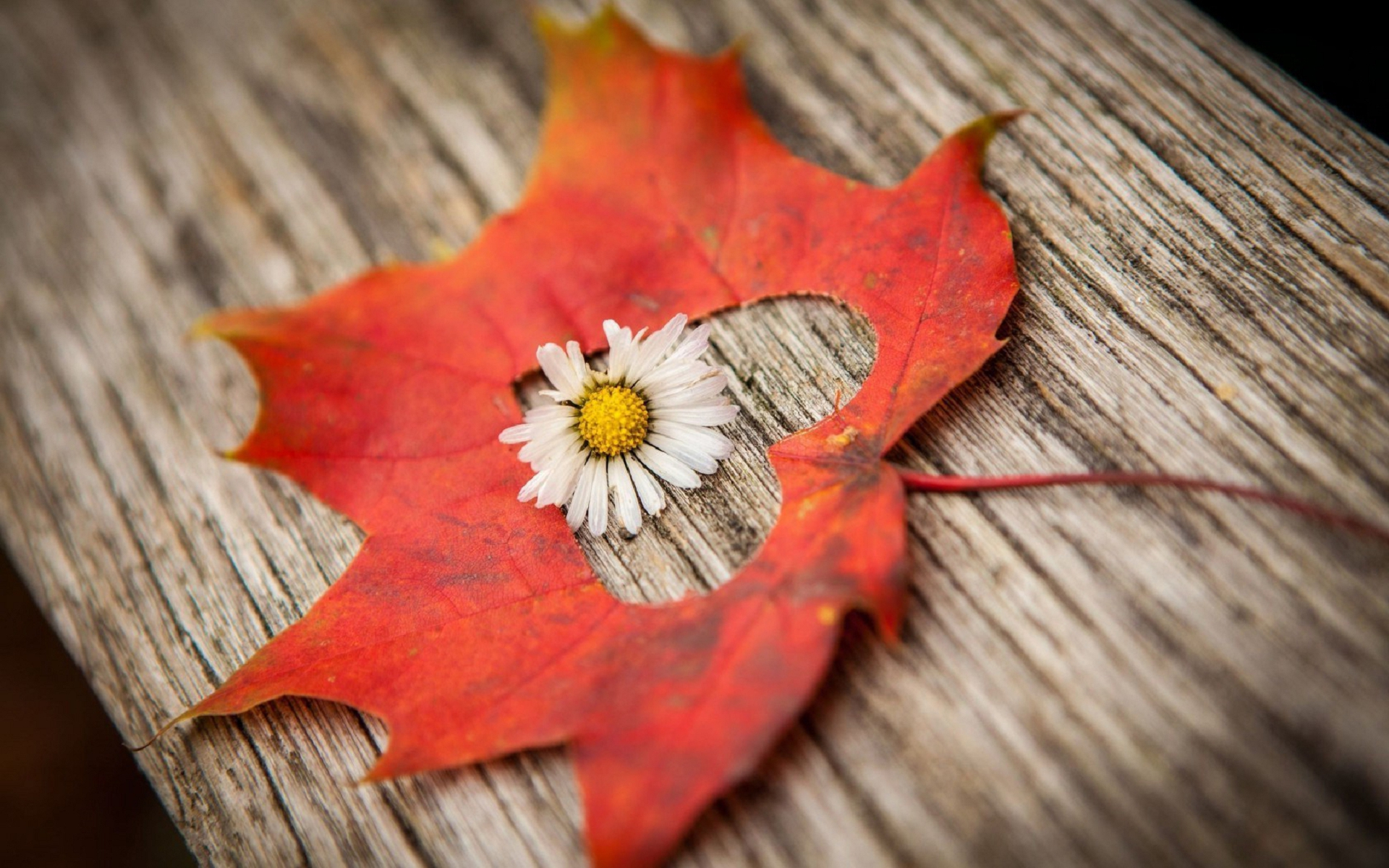 fall flowers wallpaper by - photo #36