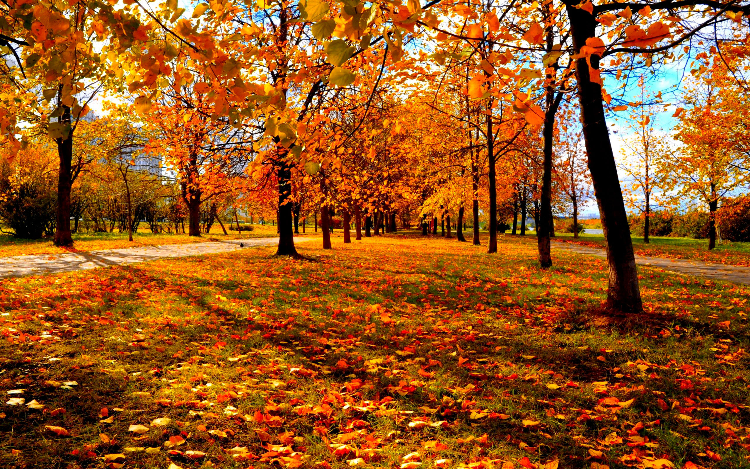 High Resolution Fall Wallpaper: Autumn Wallpapers Images Photos Pictures Backgrounds