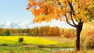 Autumn Widescreen