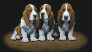 Basset Hound Hd Background
