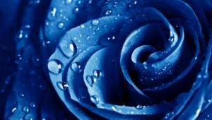 Blue Flowers Computer Wallpaper