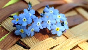 Blue Flowers Hd Background