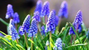 Blue Flowers High Definition Wallpapers