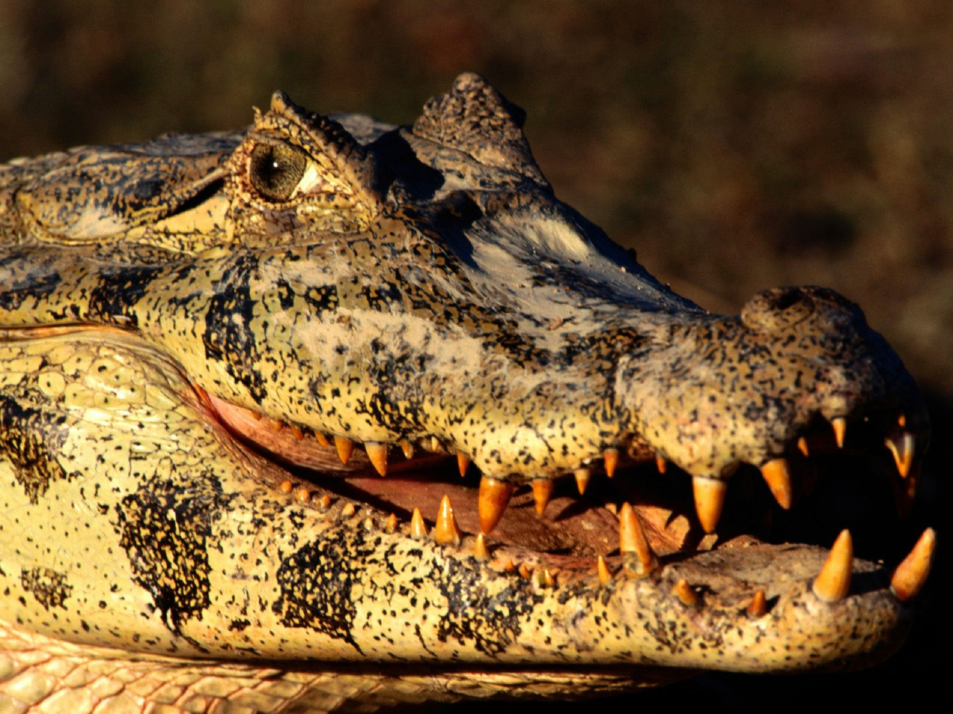 Caiman Pictures