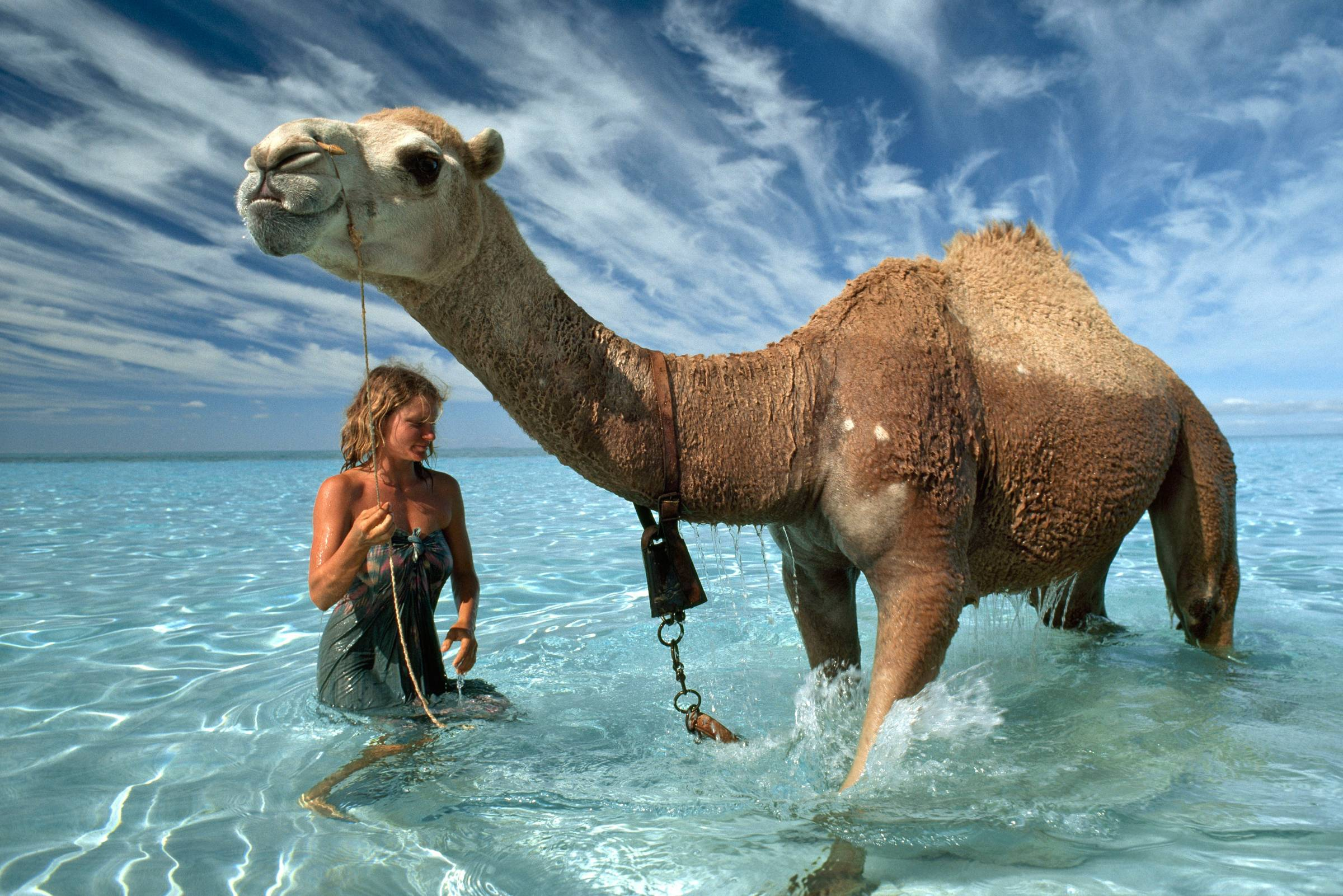 Camel Background