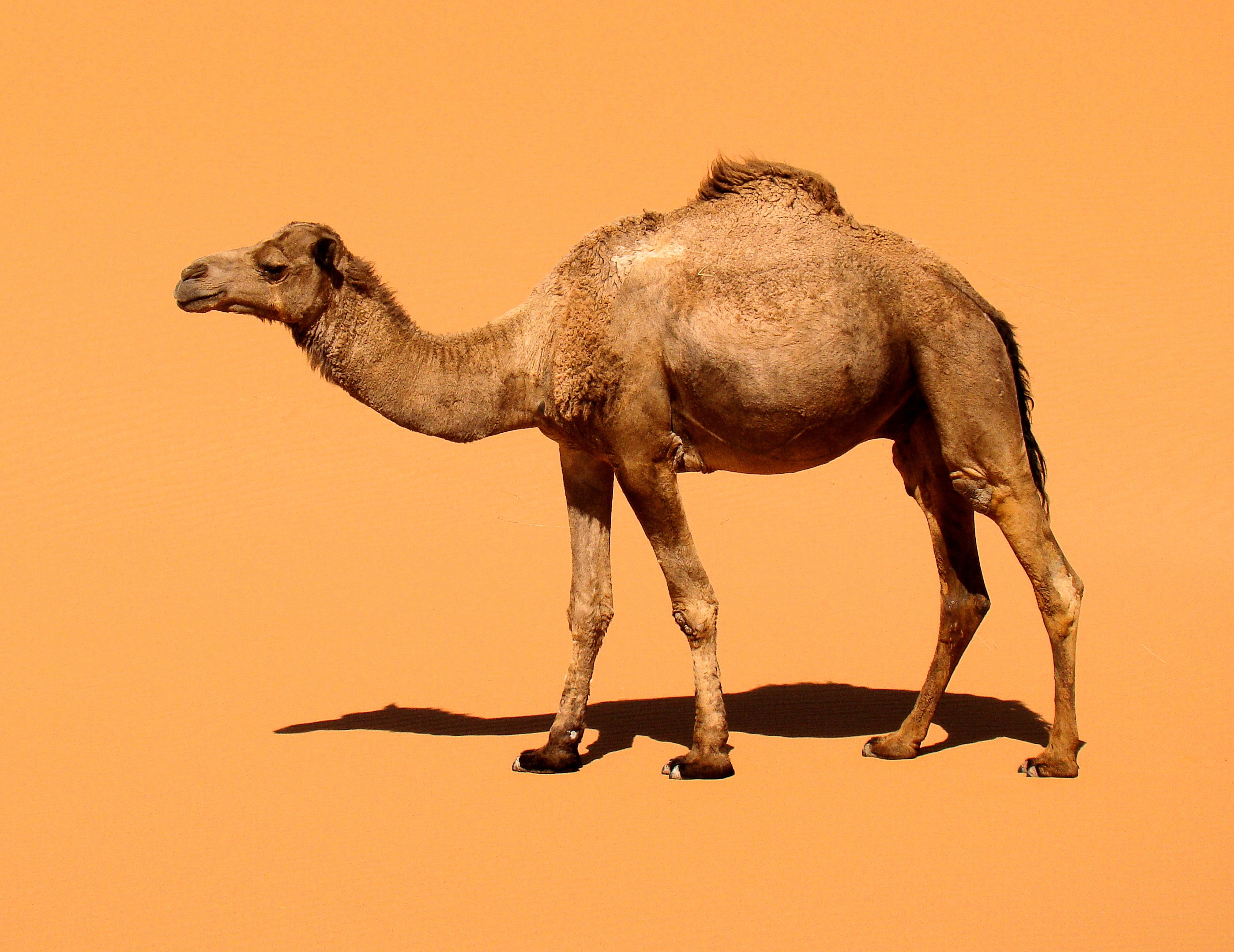 What Animals Live In The Desert For Kids