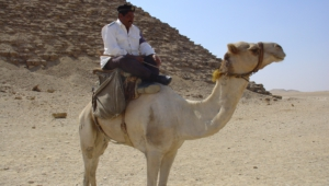 Camel For Desktop