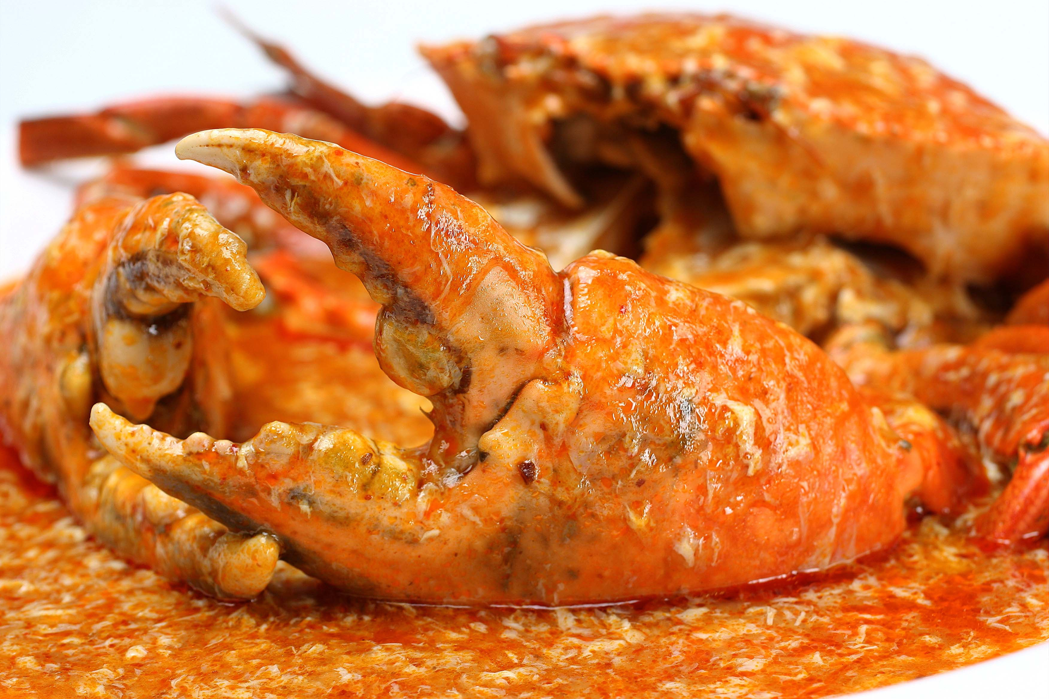 Chili Crab Photos