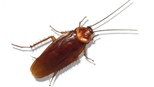 Cockroach Photos