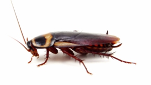 Cockroach Wallpapers Hd