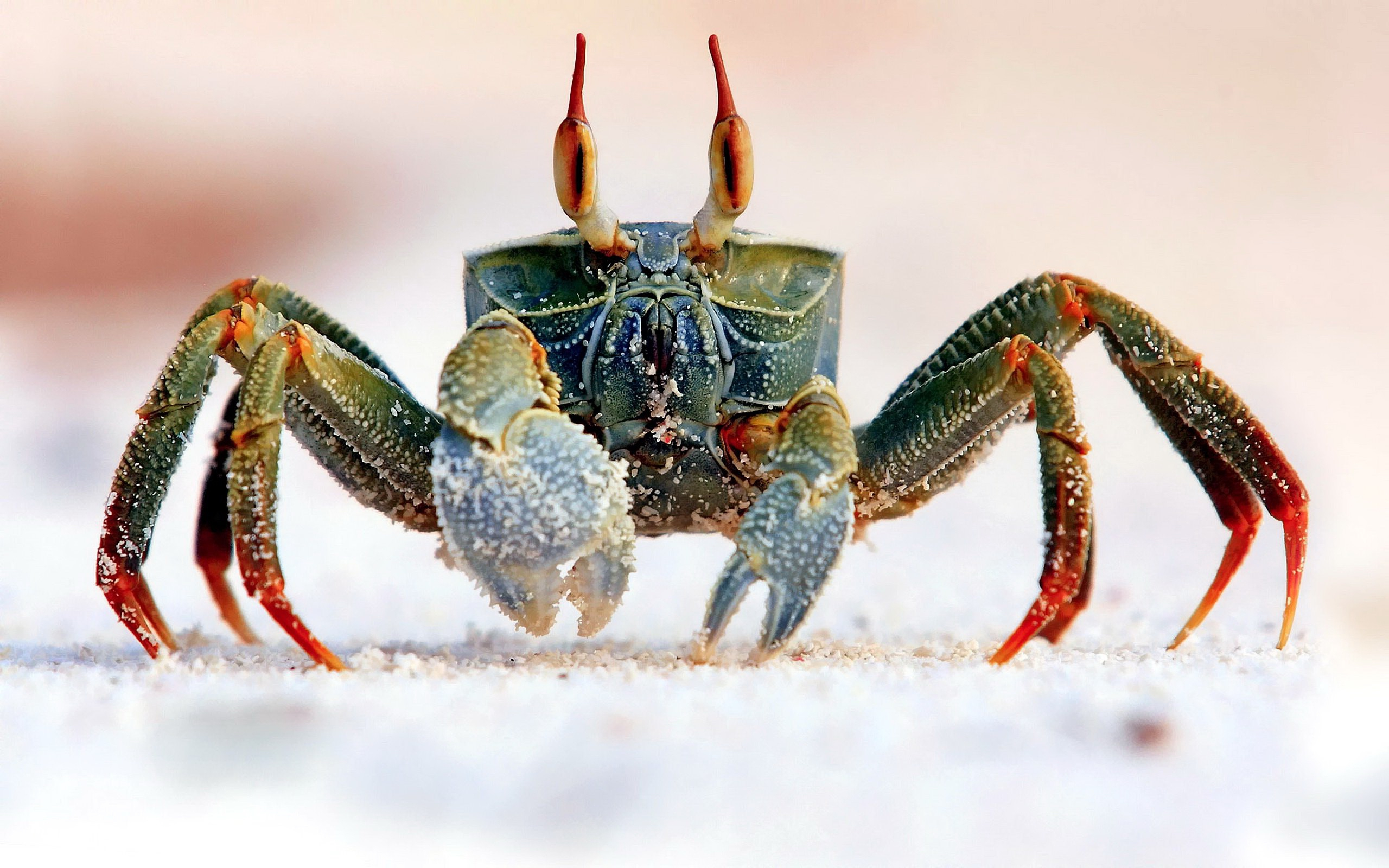 Crab Computer Wallpaper