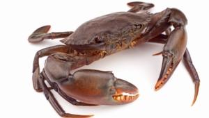 Crab Desktop