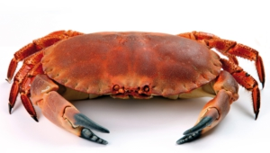 Crab High Definition Wallpapers