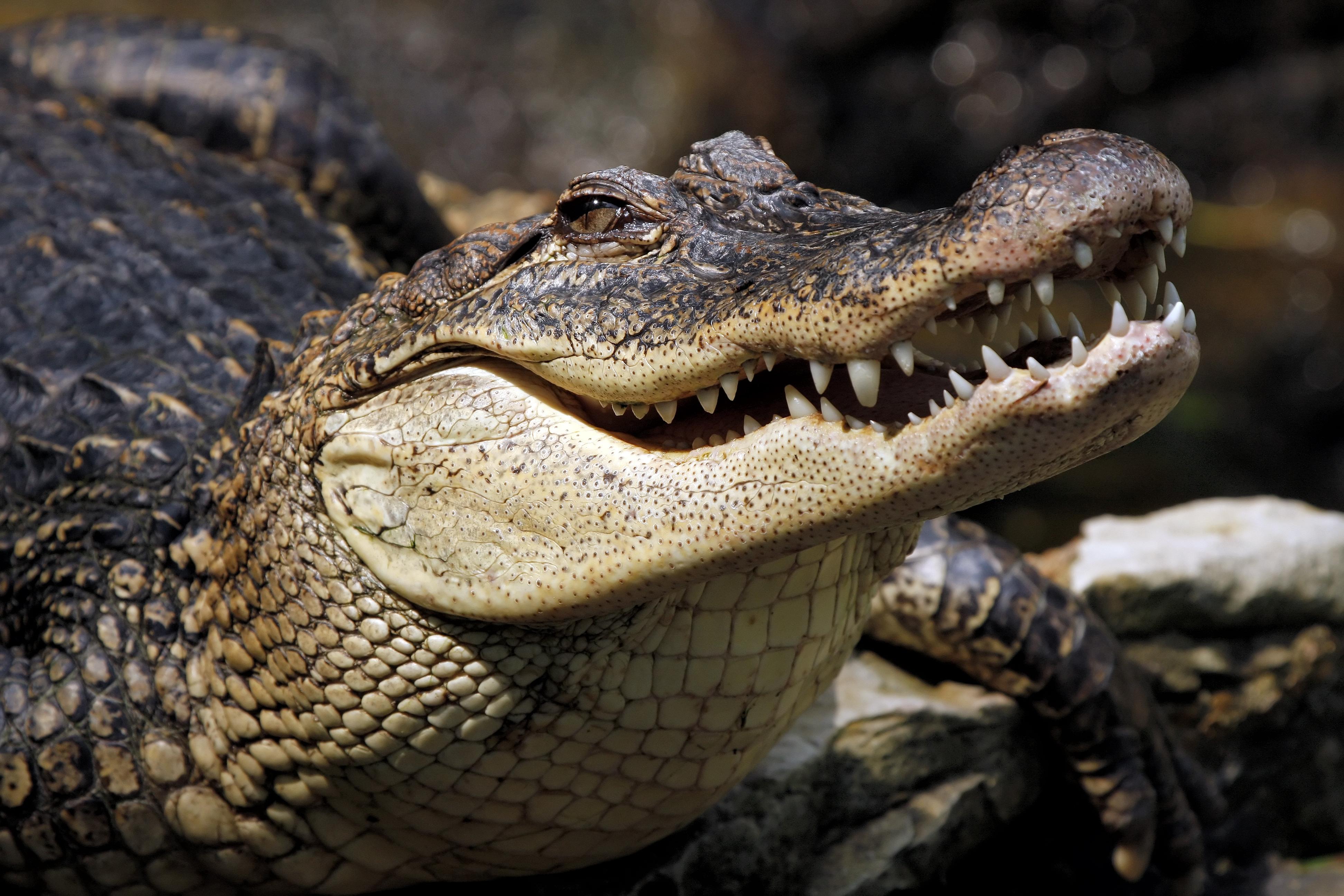 Crocodile Desktop