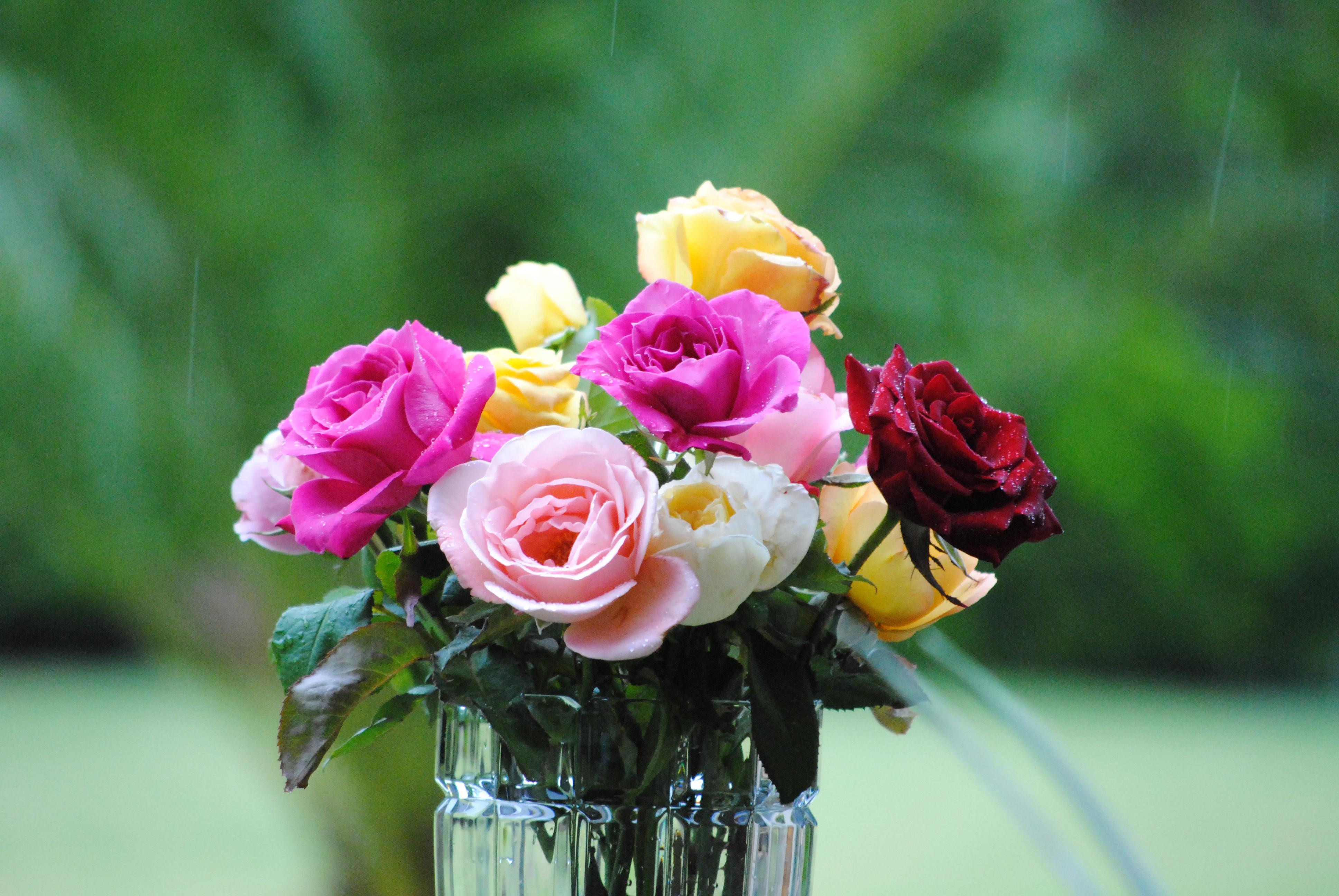 Что делать, чтобы розы дольше стояли: как сохранить розы в 43