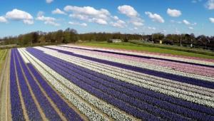 Flower Fields Desktop Wallpaper