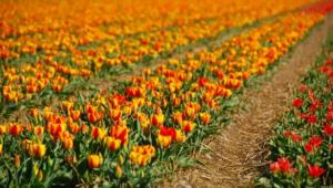 Flower Fields Hd Background