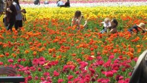 Flower Fields Wallpaper For Computer
