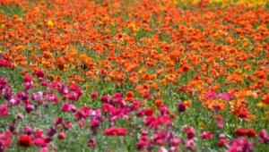 Flower Fields Wallpapers Hd