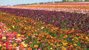 Flower Fields Wallpapers Hq