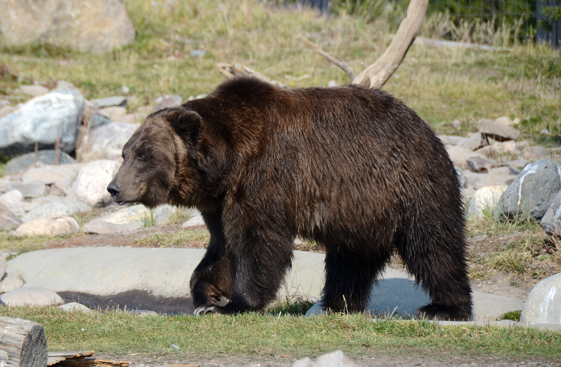 Bear Photos and Stock bear pictures - Niebrugge