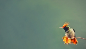 Hummingbird Computer Wallpaper