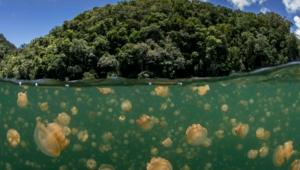 Jellyfish For Desktop