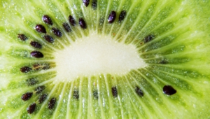 Kiwi Hd Wallpaper