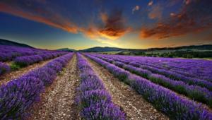 Lavender Computer Backgrounds