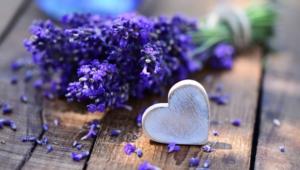 Lavender Desktop Wallpaper