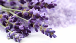 Lavender High Quality Wallpapers