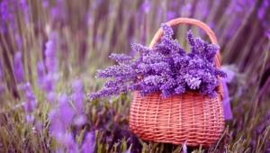 Lavender Widescreen