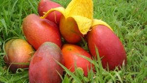 Mango Desktop