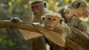Monkey Desktop