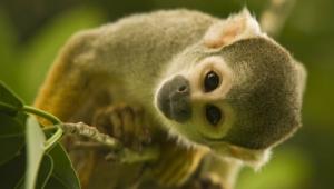 Monkey Hd