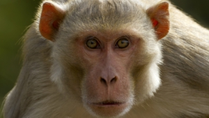 Monkey Hd Background