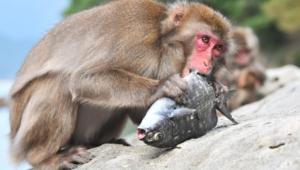 Monkey Hd Desktop