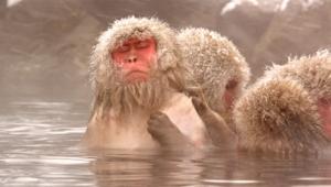 Monkey High Definition