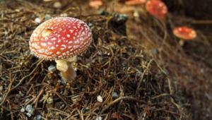 Mushroom Photos