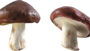 Mushroom Full Hd
